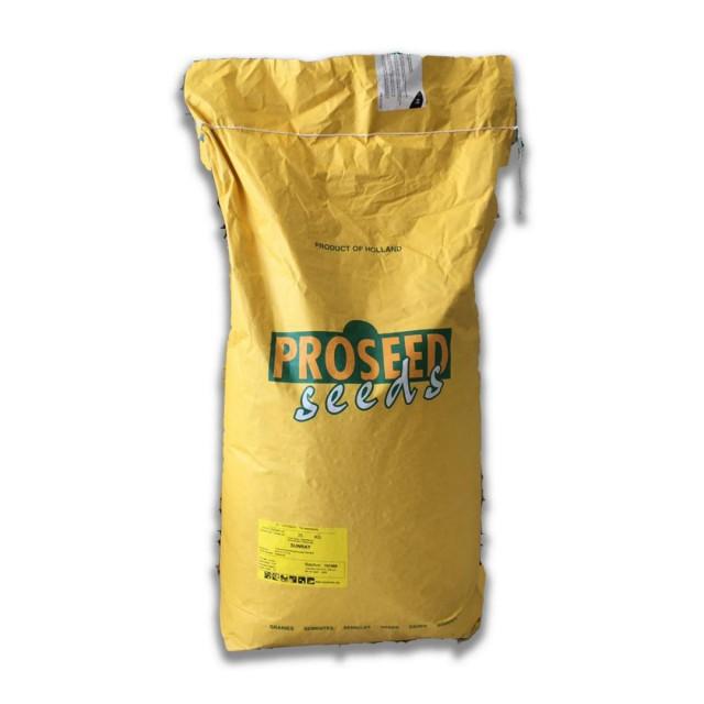 بذر لوبیا سبز سان ری PROSEED هلند  وزن 25 کیلو گرم