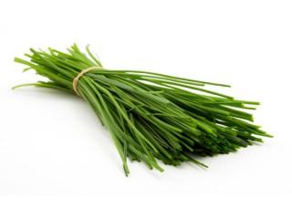 بذر تره اصلاح شده
