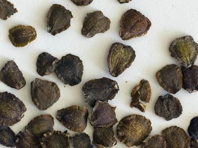 بذر افرا ایرانی(100گرم)