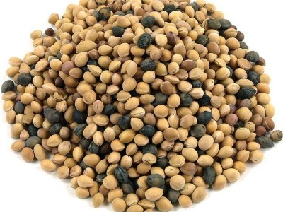 بذر آلبالو تلخ (1کیلوگرم)