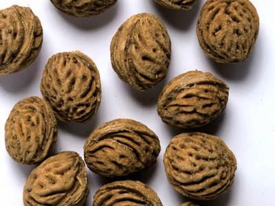 بذر هلو یزدی(100گرم)