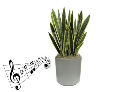 تاثیر موسیقی بر رشد گیاهان