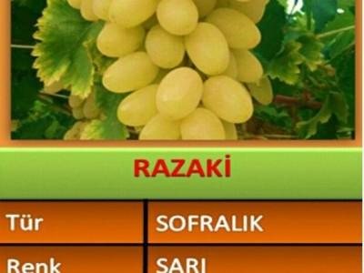 نهال انگور رازکی(razaki)