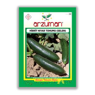 بذر خيار هيبريد selen آرزومان ترکیه - Arzuman
