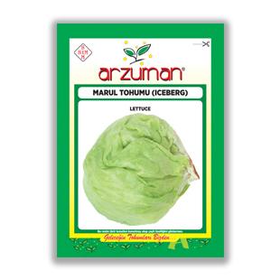 بذر كاهو پيچ (آيس برگ) آرزومان ترکیه - Arzuman