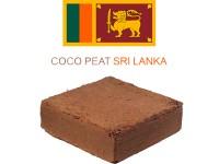 کوکوپیت سریلانکا