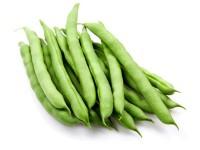 بذر لوبیا سبز بدون نخ هلندی