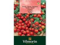 بذر گوجه چری ویلمورین