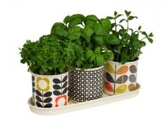 پک سبزیجات پاییزه + ملزومات کاشت