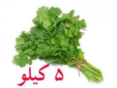 بذر گشنیز اصلاح شده 5 کیلویی کشتزار