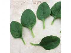 بذر Baby اسفناج هیبرید - USA