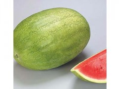 هندوانه چارلستون گری