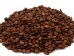 بذر ارغوان (100گرم)