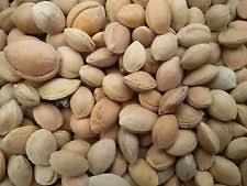 بذر آلوچه(یک کیلوگرم)