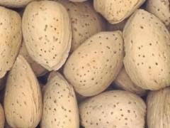 بذر بادام تلخ(100گرم)