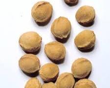 بذر زردآلو(100گرم)