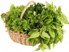 بذر سبزیجات Vilmorin