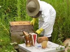 ملزومات زنبورداری