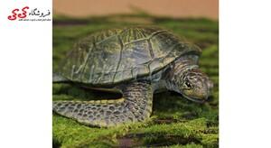 ماکت حیوانات لاک پشت fiqure of Turtle