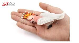 خرید اینترنتی فیگور حیوانات طوطی کاکادو رنگی
