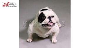 قیمت و خرید فیگور حیوانات سگ بولداگ Fiqure of Dog