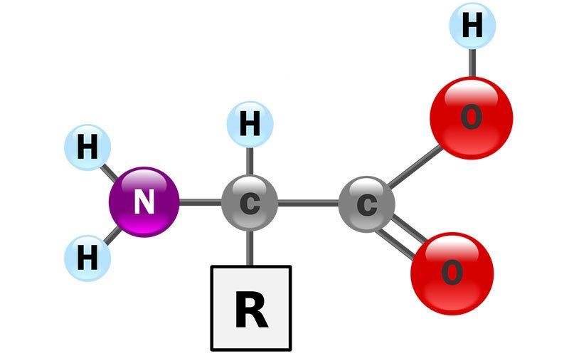 9 آمینو اسید ضروری و کاربرد آنها