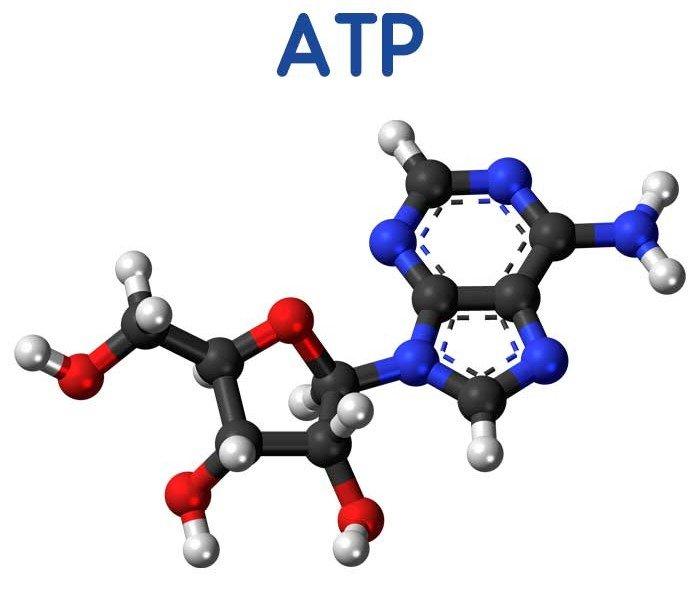 آدنوزین تری فسفات (ATP)