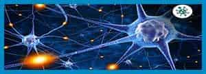 اثر امواج الکترومغناطیس بر واکنش های اکسیژنی سلول ها (ROS)