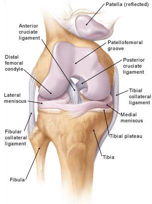 درمان آرتروز زانو با دستگاه فیزیوتراپی خانگی فارادیک بریجیس