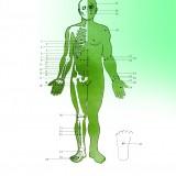 تصاویر 94 نقطه جهت درمان بیماریهای مختلف