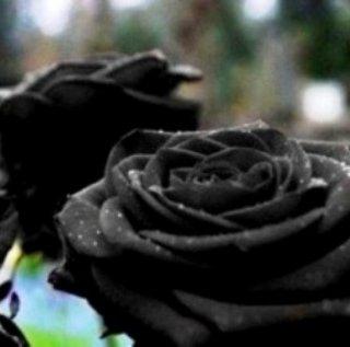 نادرترين و عجيب ترين گل رز دنيا