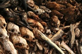 هشدار دانشمندان نسبت به وقوع ششمین انقراض جمعی زمین