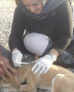 آغاز جنبش مهربانی با حیوانها از تبریز