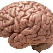 سنجش نبض پیری مغز با روش جدید