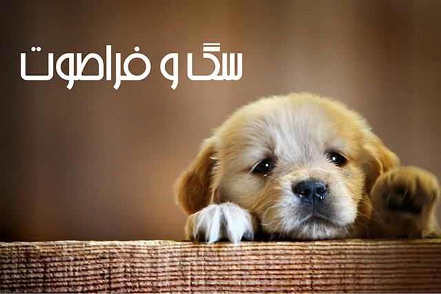 آموزش سگ با سوت فرا صوت
