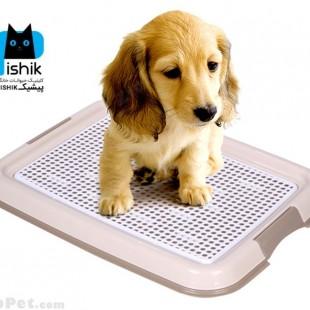 توالت سگ و سینی آموزش دستشویی سگ