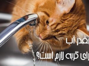 چقدر آب برای گربه لازم است؟