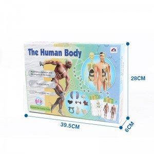قیمت  آناتومی بدن انسان مدل 33021