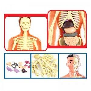 بازی آناتومی بدن انسان مدل 33021