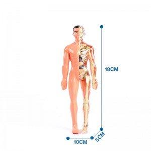 خرید بازی  آناتومی بدن انسان مدل 33021