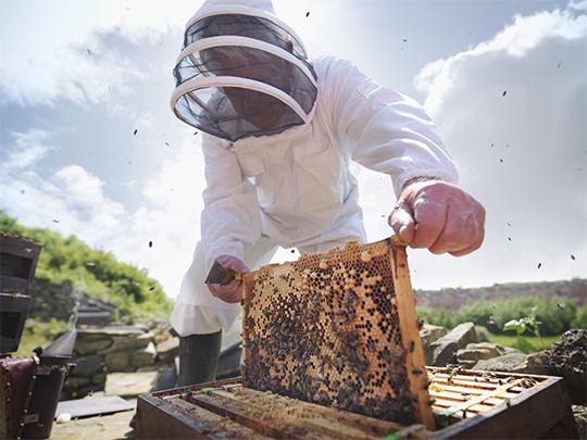 عسل ممتاز