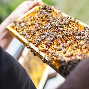 عسل زنبوردار