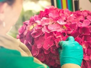 چه طور گلفروش موفقی باشیم؟ گفتار پنجم: منعطف باشید