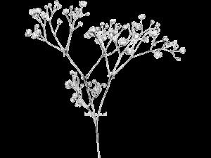 گل شاخه بریده عروس ایرانی