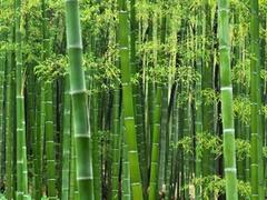 بامبو الیافی ویژه در صنعت نخ و پارچه