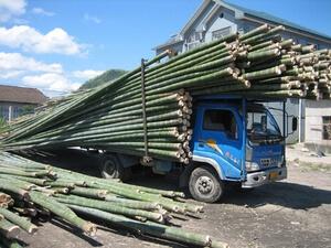 تولید نخ بامبو