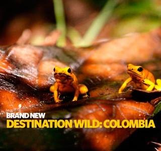 دانلود مستند Destination Wild: Colombia حیات وحش کلمبیا