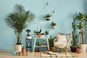 تاثیر نگهداری گل و گیاهان در منزل و محیط کار