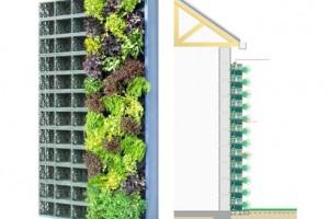 مراحل نصب دیوار سبز