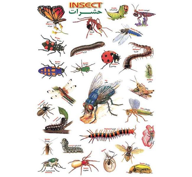 برچسب آموزشی حشرات